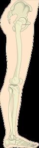 Kĺby v nohách